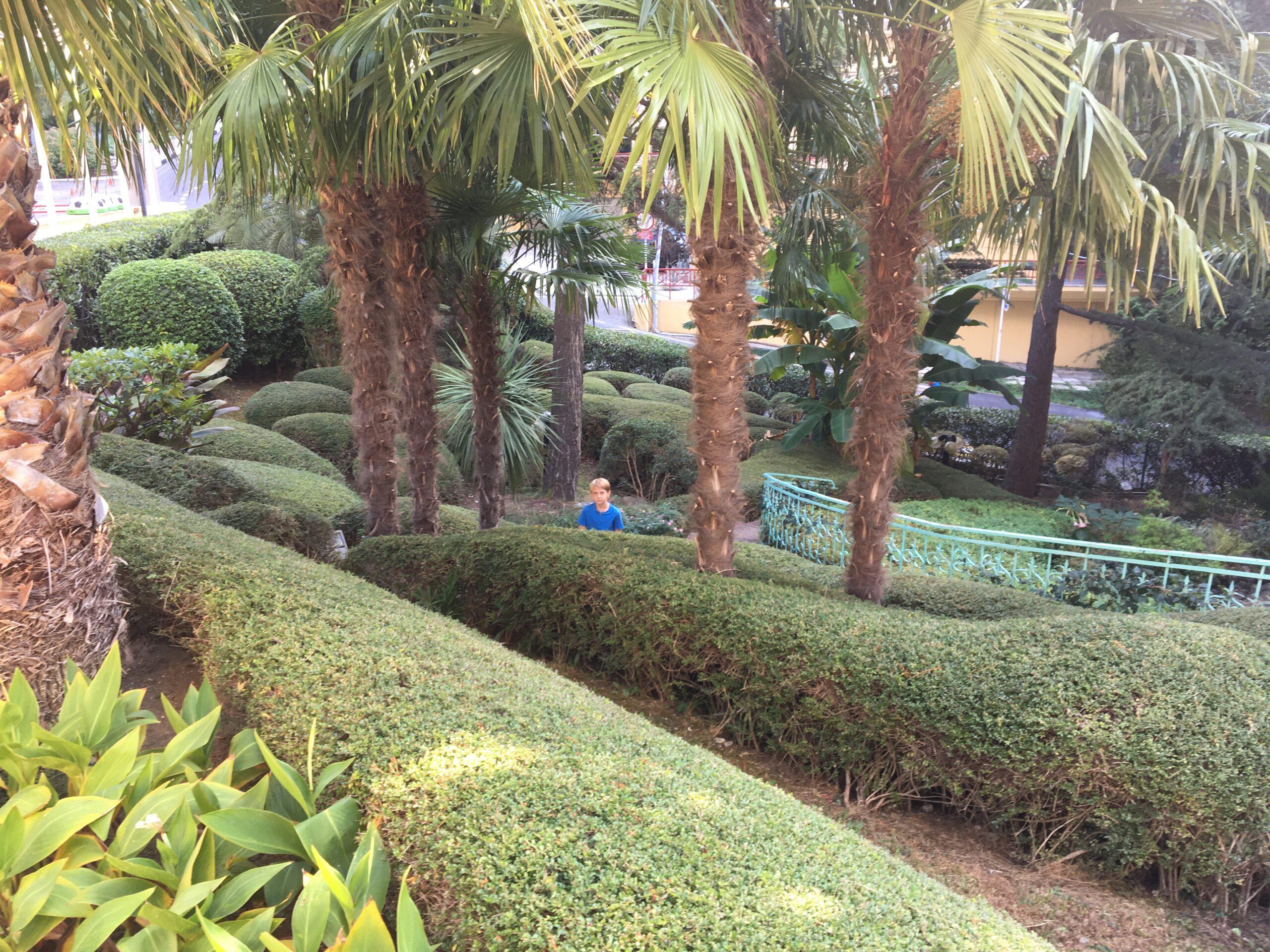 Лабиринт из кустов в парке гостиницы Лазурная